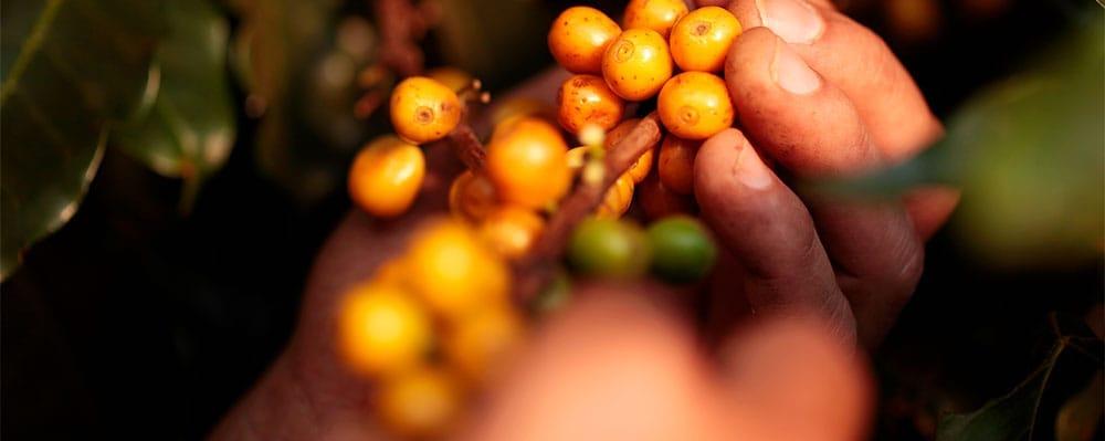blog-ineffablecoffee-roasters-cafe-sao-silvestre-04rrtVpZZHfa5sP
