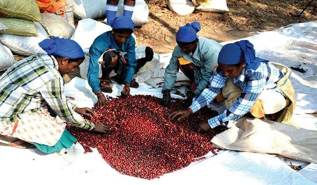 19i3_INDIA_coffee_1