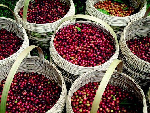 harvest-red